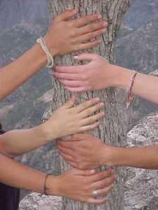 friendship_tree_image