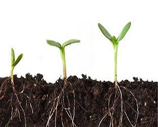 PlantRoots_image